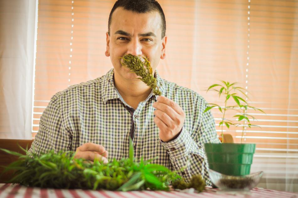 marihuana que cura y embellece