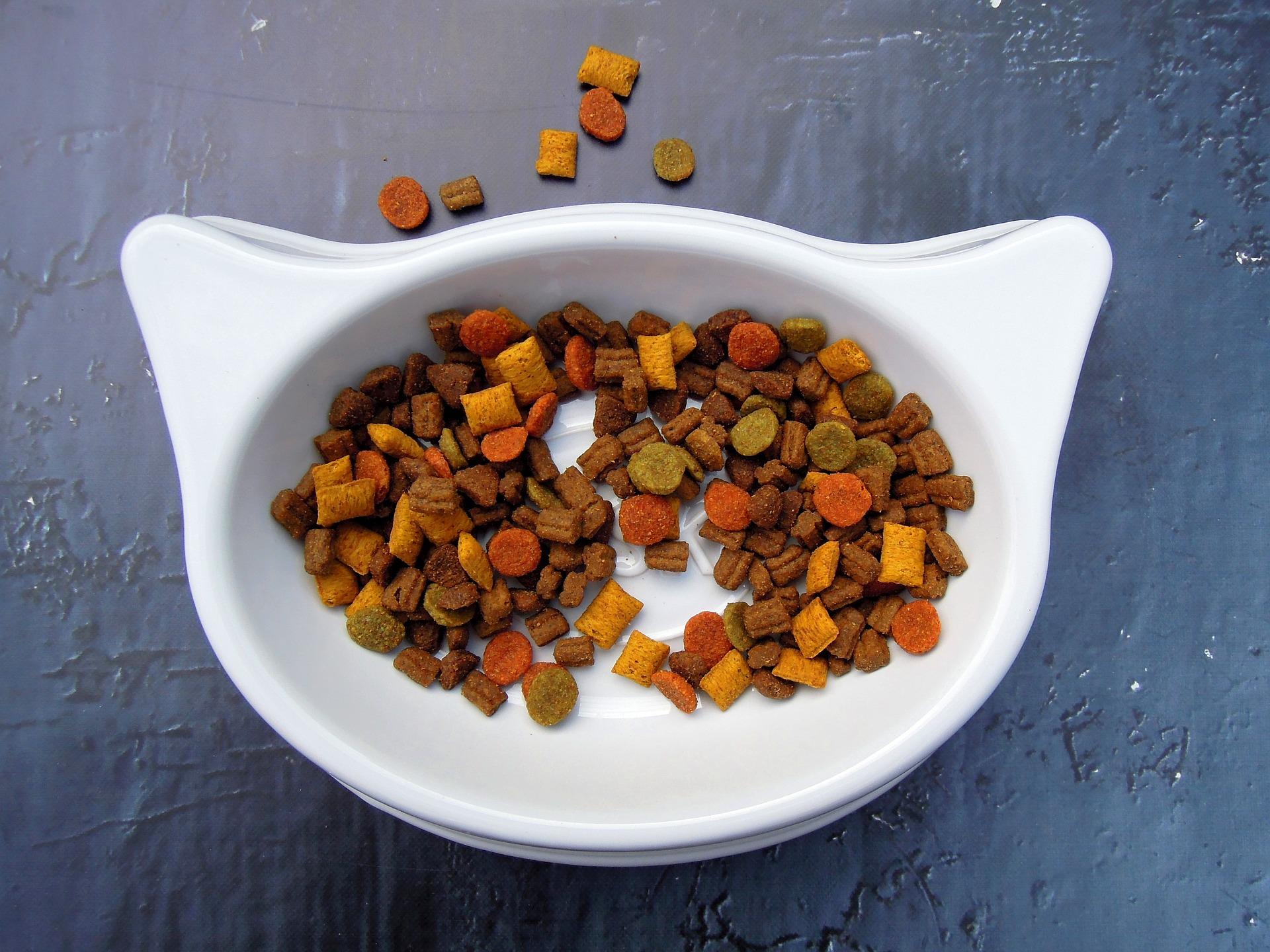 Mascotas - alimento gato