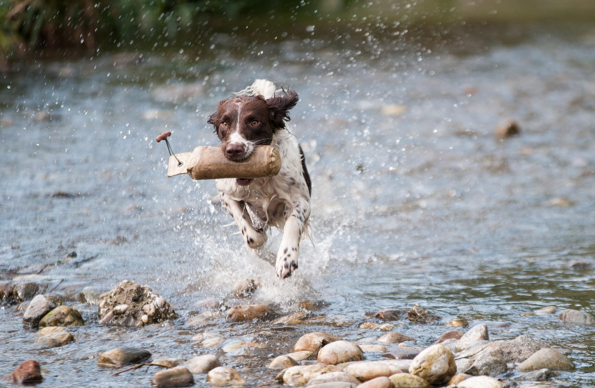 Perro - correr-
